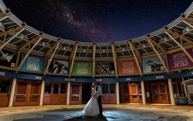Mystic Aquarium - CT Wedding Photographers